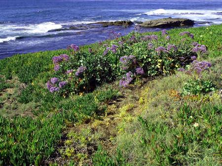 Colorful spring flowers along a lush pacific coastline Reklamní fotografie