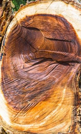 woodpile: old stump wood detail surface pattern Stock Photo