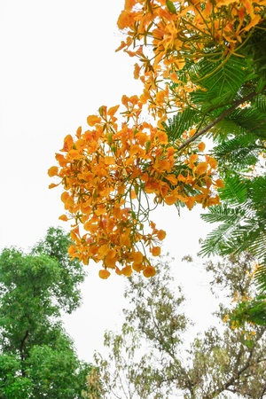 orange bloom flower at nature on white sky photo