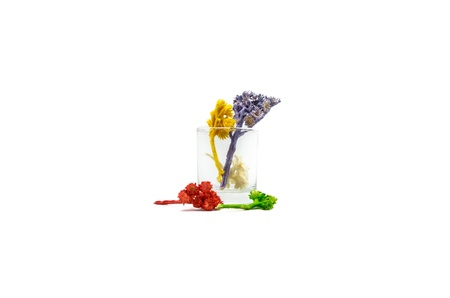 small colour flower plant in glass for decoration isolated on white background photo