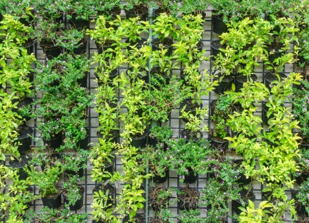 grating: many vertical farm green plant pattern in pot cultivation on steel grating Stock Photo