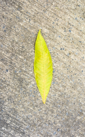 single abstract green leaf tone on old grey tone concrete floor cover photo