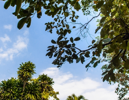 fresh nature green leaves pattern on bright blue sky photo