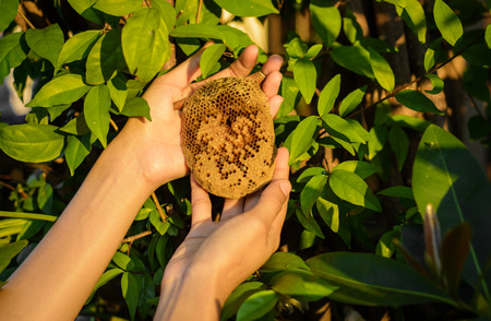girl hand get beehive honeycomb on the tree at outdoot summer natural photo