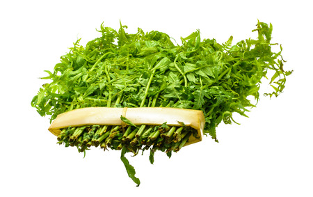 green leaves of vegetable fern for cook isolated on white background photo