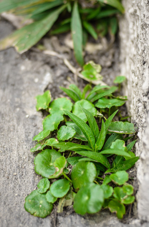 plant weed growing through crack in pavement concrete outdoor photo