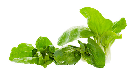 vegetable green Bok choy (chinese cabbage) isolated on white background photo