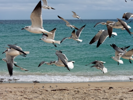 water s edge: Flock of seagulls flying at the water s edge