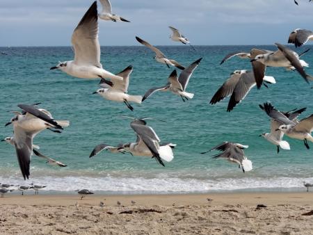 water s edge: Gregge di gabbiani volare in riva al mare s