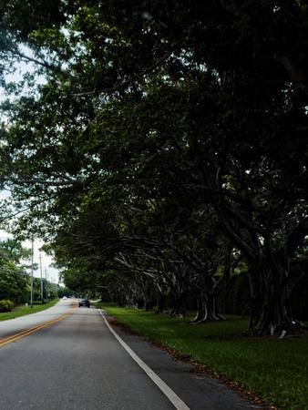 treelined: Tree-lined two lane road Stock Photo