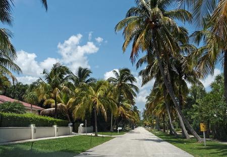 residential street: Tree Lined Residential Street