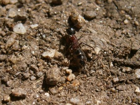 Ant on the ground Фото со стока