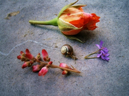 Snail with roses and other flowers, snail trail photo