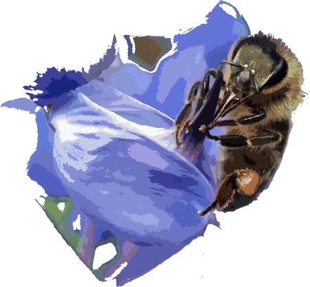pollinating: Bee pollinating a flower Illustration