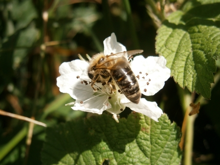 Bee pollinating a flower photo