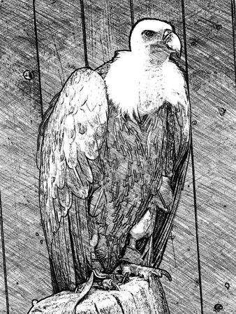 transferred: Vulture transferred to computer painting, vulture in blackwhite