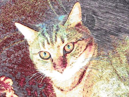 transferred: Cat transferred to computer painting