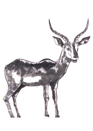 the antelope painting on paper photo