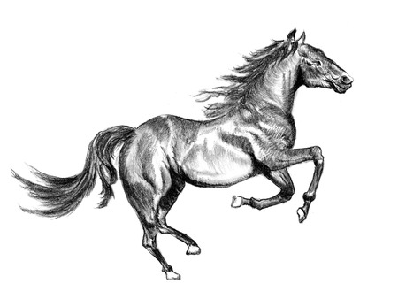 a horse sketch on paper photo