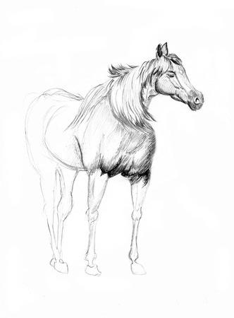 un bosquejo del caballo en el papel photo