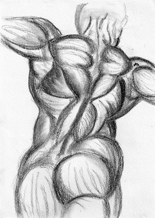 naked male: body back sketch on paper