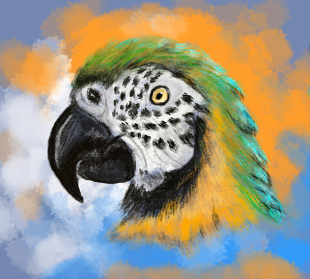 hand draw parrot cg paint photo