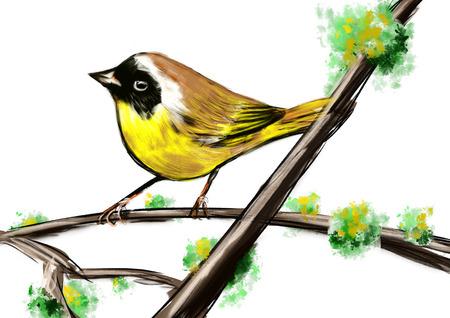 cg: hand draw bird cg paint