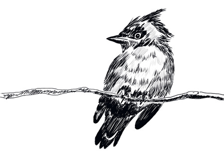 cg: hand drawn bird with cg paint