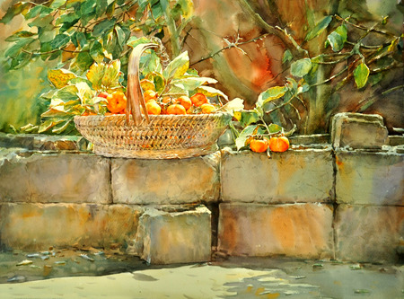 art painting: watercolor painting persimmon hand drawn , on paper Stock Photo