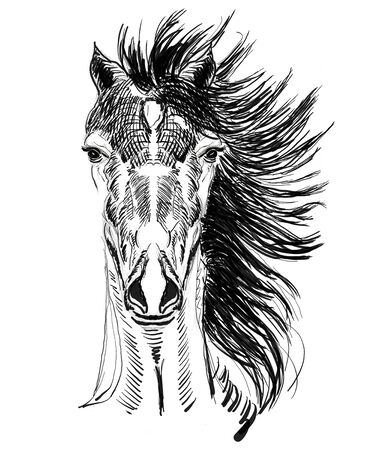 horse head hand drawn illustration,art design,wall inspiration Stock Illustration - 134345850