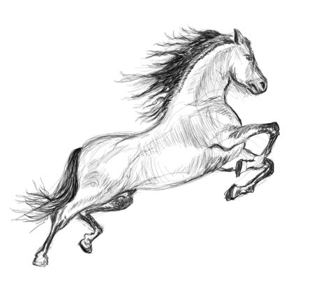 horse hand drawn illustration,art design,wall inspiration Stock Photo