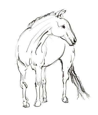 horse hand drawn illustration,art design,wall inspiration Stock Illustration - 135359188