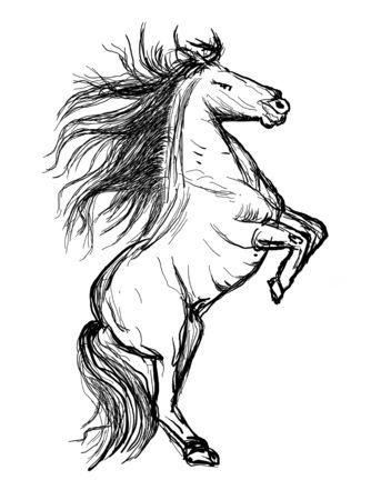 horse hand drawn illustration,art design,wall inspiration Stock Illustration - 135359299
