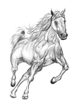 horse hand drawn illustration,art design,wall inspiration Stock Illustration - 135359273