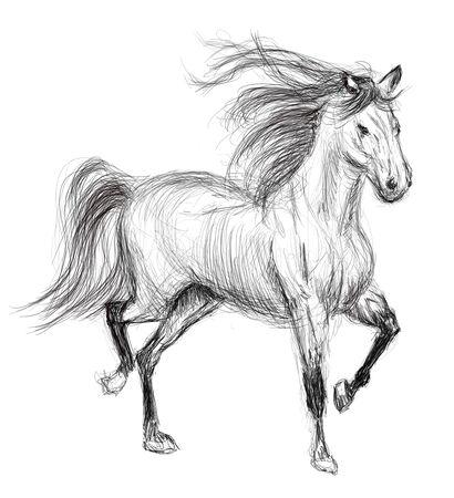horse hand drawn illustration,art design,wall inspiration Stock Illustration - 135362251