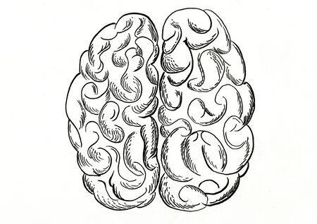brain hand drawn illustration,art design,wall inspiration