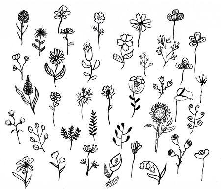flower doodle hand drawn illustration,art design,wall inspiration