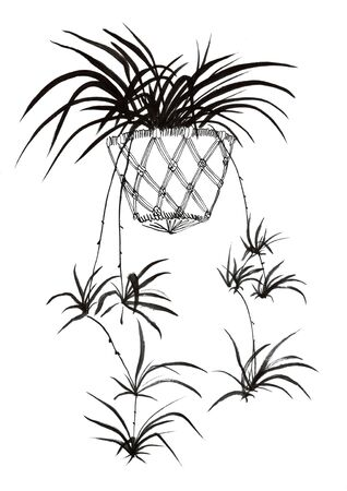 Spider plant hand drawn illustration,art design,wall inspiration 免版税图像