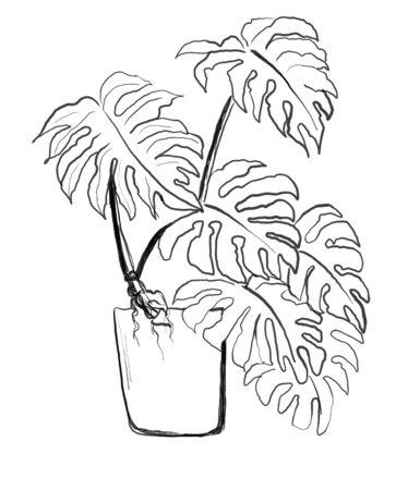 plant hand drawn illustration,art design,wall inspiration
