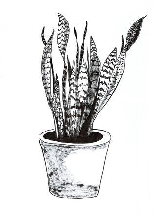 Sansevieria trifasciata hand drawn illustration,art design,wall inspiration 免版税图像