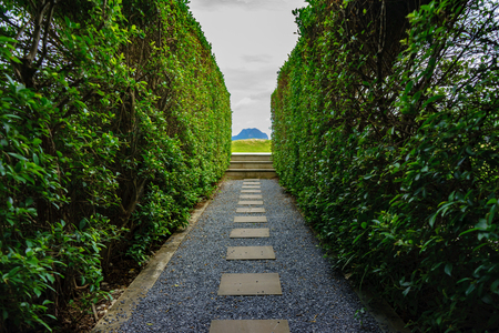 pavers: Marble walkway Two sides of the tree Stock Photo