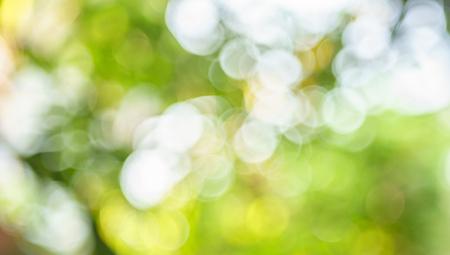 Abstract bokeh green Stock Photo