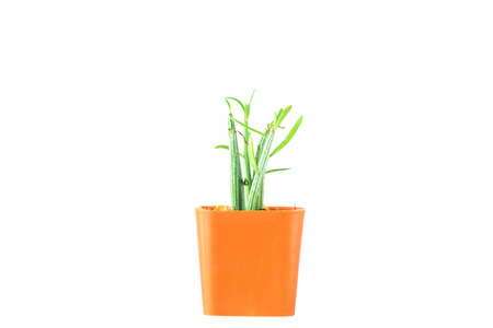 Mini cactus pot isolated on white background