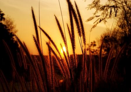 sunlight behind tropical grass photo