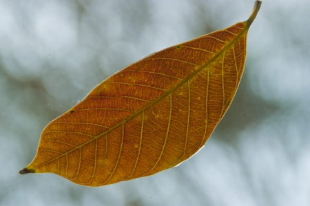 leaf for background photo