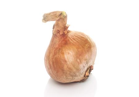 cebolla blanca: Cebolla, cebolla fresca aislado en un fondo blanco Foto de archivo