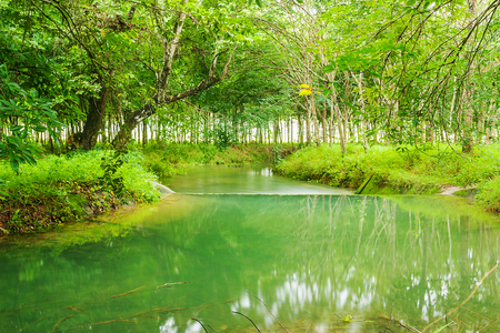 green river: Beautiful of green tree and green river, Tropical nature