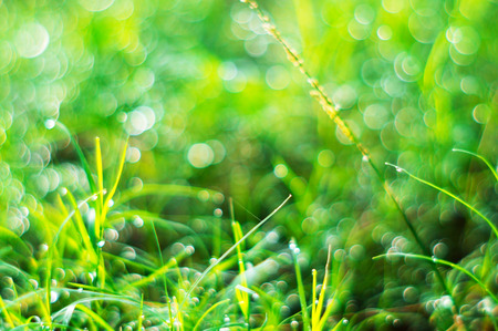 Nature bokeh with green grass and sunlight in morning light Stock Photo