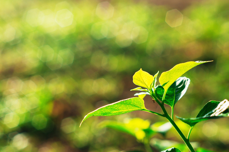 Green leaf with nature bokeh and sunlight in morning light Stock Photo