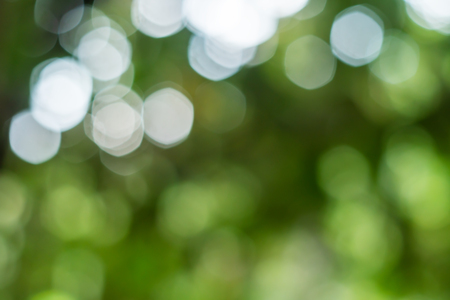 Abstract light bokeh nature from green leaf in sunlight
